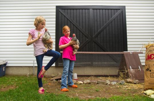 Gabriella Jackson (left) and Katie Culman, both 9, play with rented chickens in Jackson's yard in Lexington. Gabriella was primary caretaker of the chickens, which laid about an egg a day.