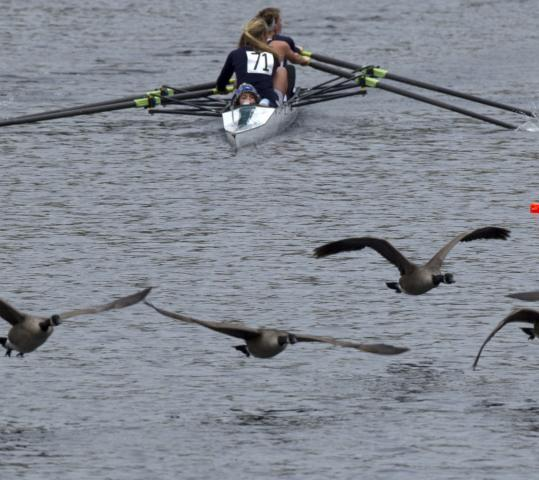 The Duxbury Bay youth four was forced to share the Head course with a flock of geese.