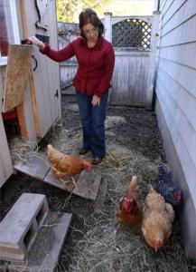 Nancy Murphy's five chickens live in a coop with adjustable electric baseboard heat.