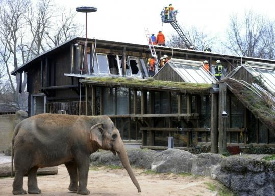 Firefighters responded to a blaze at the elephant house of the zoo in Karlsruhe, Germany. Shetland ponies, goats, sheep, and a llama were among the animals killed. No cause has been determined.