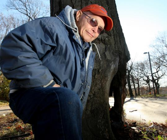 Joe Hohmann is worried about red oak trees falling down along the Jamaicaway.