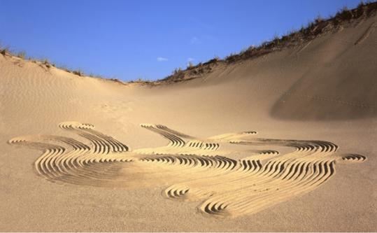 """Zen Dune #17'' is part of Daniel Ranalli's ""Traces'' exhibit in Provincetown."
