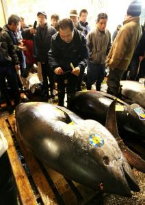 The $396,000 paid for this 754-pound bluefin, prized by sushi chefs, set a record at the world's largest wholesale fish market.