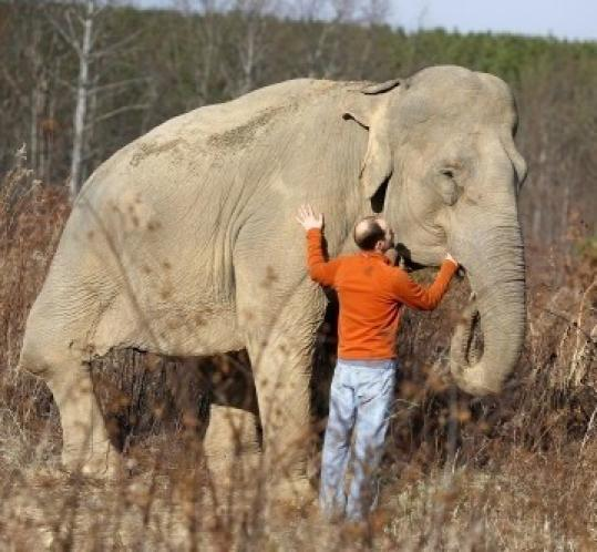 Scott Blais, seen last month, cofounded the refuge, which seeks to play an educational role in elephant care.