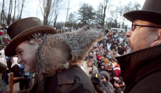 Punxsutawney Phil, the weather-predicting groundhog, stood on the shoulder of one of his handlers, John Griffiths.
