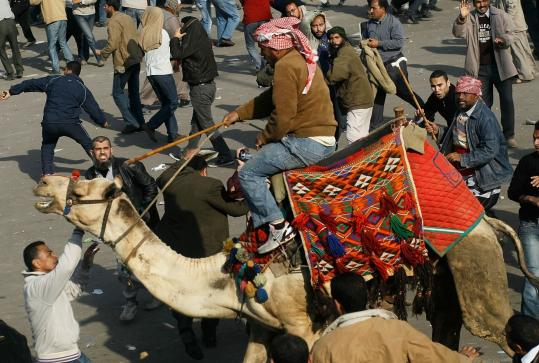 A supporter of Egyptian President Hosni Mubarak rode a camel through the crowd during a clash between Mubarak backers and protesters yesterday in Cairo.