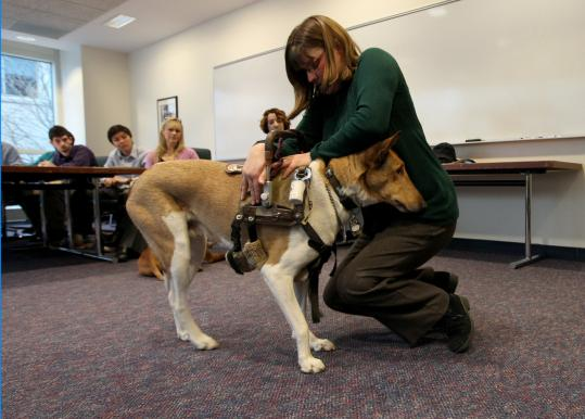 Kristin Hartness Law, of the nonprofit group Canines for Disabled Kids, used Bronson for support during a service dog demonstration last week for a group of Northeastern University engineering students.