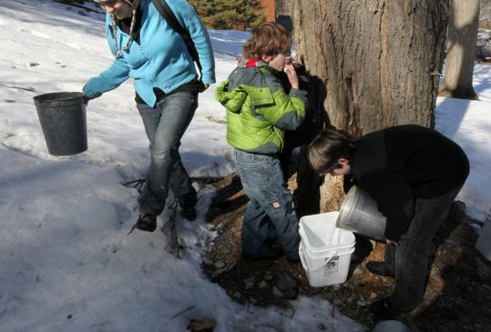 From left: Katie Gradowski, Ethan Cole, and Tyler Rynne collect sap on the Tufts University campus for the Somerville Maple Syrup Project.