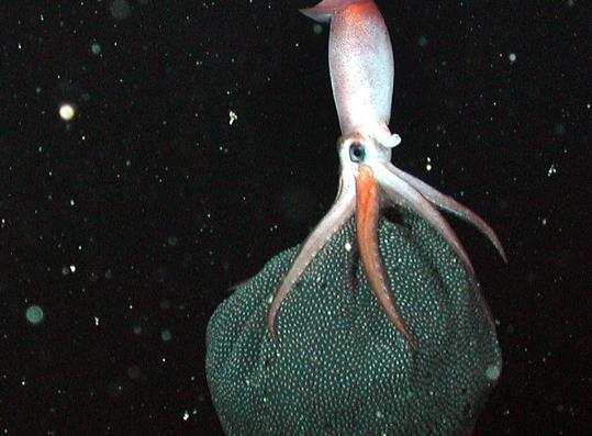 A story about a rare giant squid specimen that has disappeared is the pick of the week.