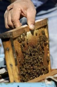 Beeswax is really wax; not all things called wax (such as paraffin) actually are.