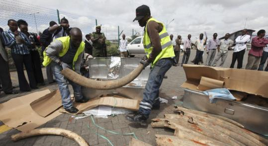 Security officials at Kenyatta International airport in Nairobi displayed elephant tusks that were part of a one-ton shipment.