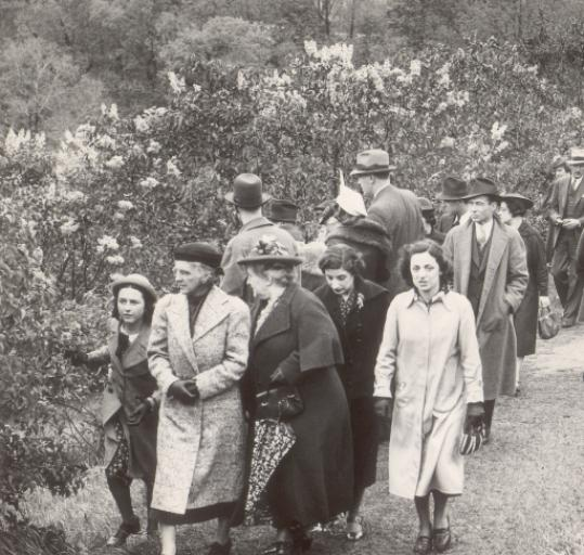 Visitors fill the the Arnold Arboretum for Lilac Sunday in 1938.