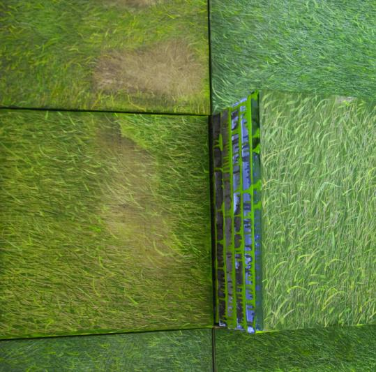 """Daniela Rivera's """"Growth'' features dozens of 2-foot-square realist paintings of grass."""