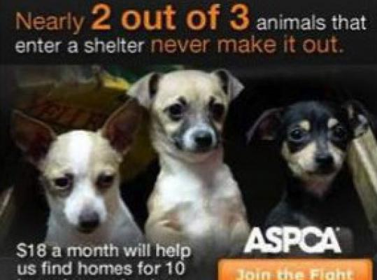 The Massachusetts Society for the Prevention of Cruelty to Animals accuses the NewYork-based American Society for the Prevention of Cruelty to Animals of deceptive advertising.