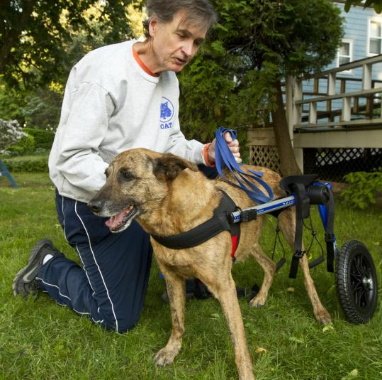 David Feeney in his West Roxbury yard with his dog, Lucky, and his pet's new wheelchair.