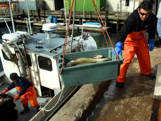 Cod is off-loaded from a boat by Anthony Giacalone at the Gloucester Seafood Display Auction in 2009.