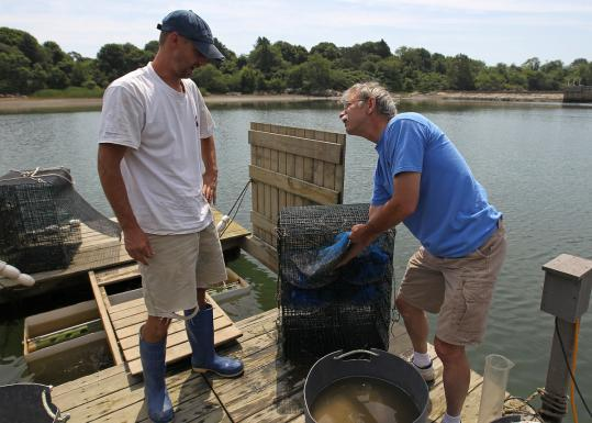 Scott Weston (left) of Lab Tech and Dr. Joe Buttner looked over the baby clams that will be planted.