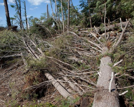 Brimfield State Forest was damaged by the tornado. There's now more drying timber and vegetation on the ground than normal.