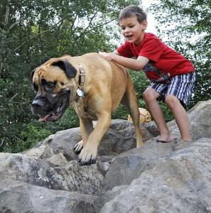 William Reardon, 6, horsed around with bullmastiff Mick, who has health insurance, in Andover.
