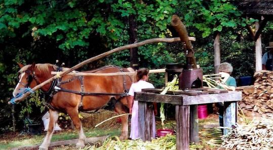 Pressing sorghum with a horse-powered mill at the Music & Molasses Arts & Crafts Festival.