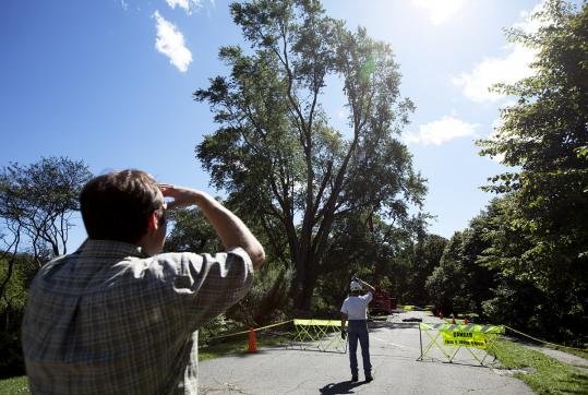 Stephen Schneider (left) manager of horticulture at the Arnold Arboretum, watched as a silver maple tree planted in 1881 was trimmed yesterday after it was damaged in Tropical Storm Irene.