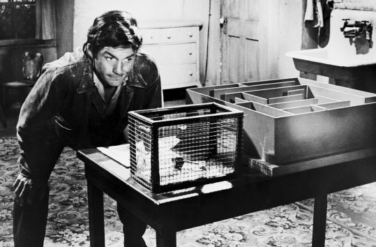Cliff Robertson in a scene featuring a mouse and a maze in the Boston-made movie 'Charly,' released in 1968.