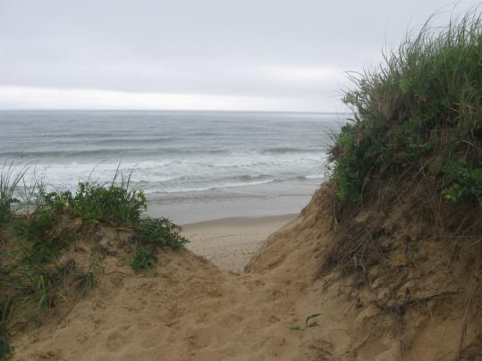 The dunes at Maguire's Landing at LeCount Hollow beach.