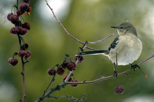 Leaving plant stalks and seed heads in backyard gardens will help birds and other wildlife survive in winter.