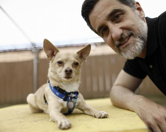 "Bill Berloni brings Chico (pictured with him in San Diego in May) to North Shore Music Theatre to play Bruiser in ""Legally Blonde,'' which stars Kelly Felthous (below)."