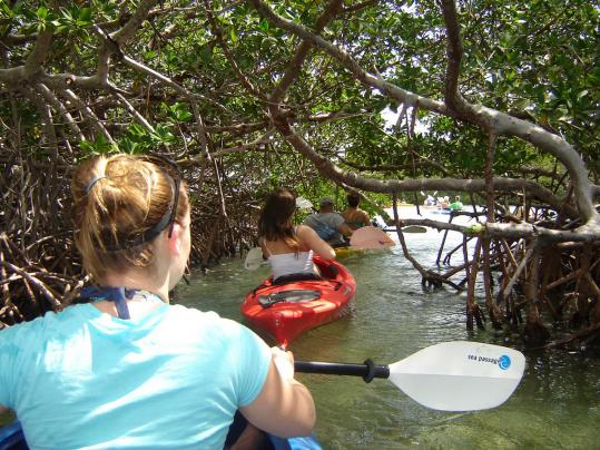 Karla Hawkins ducks beneath mangrove trees during a two-hour guided tour of Key West's backcountry waters.