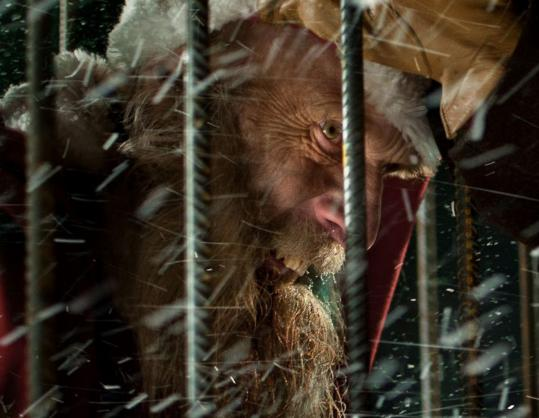 """Rare Exports: A Christmas Tale,'' Finnish director Jalmari Helander's darkly comic 2010 movie, opens the Alt-Xmas series at the Brattle Theatre."