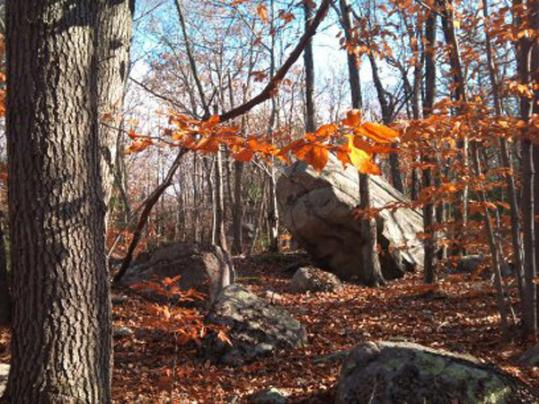 Holbrook's town forest is marked by giant glacial boulders, hikers and walkers on its trails, and remnants of old stone walls.