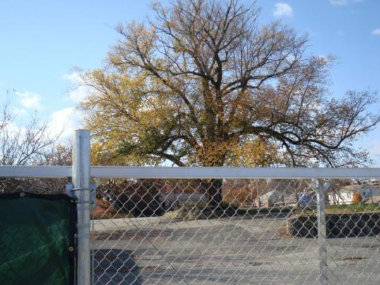 Seventy-five people signed a petition asking Mayor Thomas Koch to halt plans to cut down the 130-year-old Winfield elm.