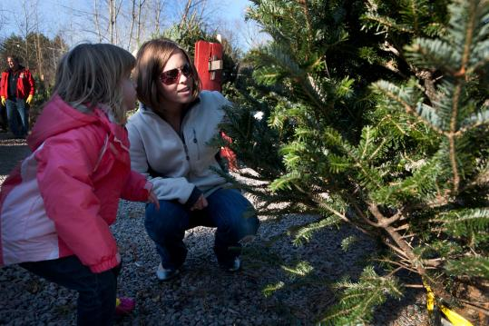 Norah, 3, and Maegan Cox study a tree at the Ashland Lions Club lot. Below, volunteers Paul Ciccolo and Deb Lada make bows for wreaths.