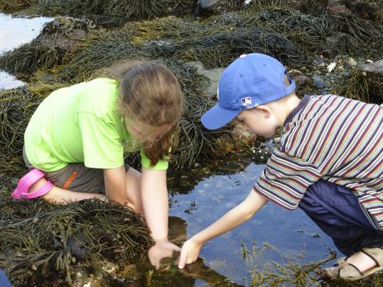 Tidepool play at Seacoast Science Center in Rye, N.H., an attraction near Wentworth by the Sea Hotel & Spa in Portsmouth-Newcastle.
