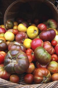 Heirloom tomatoes at Copley Square farmers&#8217; market in Boston.