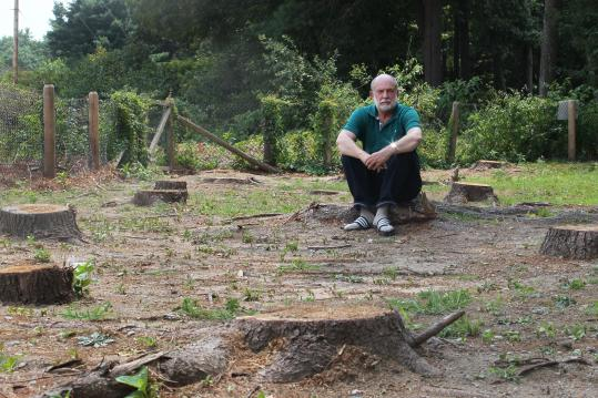 In Sudbury, among the area towns contesting NStar's policies, Richard Salus was left with 22 pine tree stumps in his yard.
