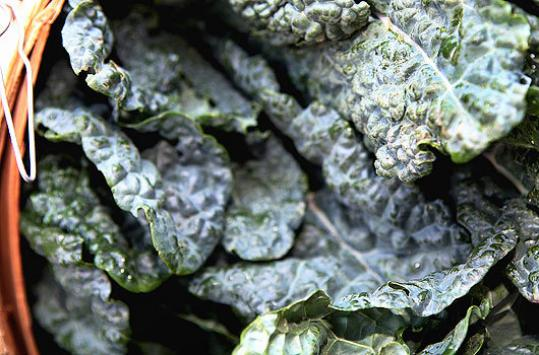 Red leaf kale