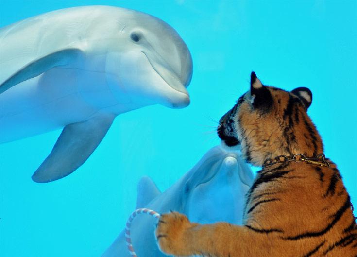 Mammalian encounter - (AP Photo/Six Flags Discovery Kingdom, Nancy Chan)