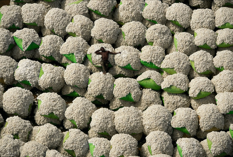 Worker resting on bales of cotton, Thonakaha, Korhogo, Ivory Coast. Cotton crops occupy approximately 335,000 square klilometers worldwide, and use nearly one quarter of all pesticides sold. [map] (© Yann Arthus-Bertrand) #