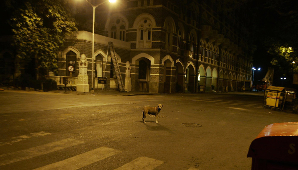 The dog was oblivious to the hineous scenes going on in Mumbai.