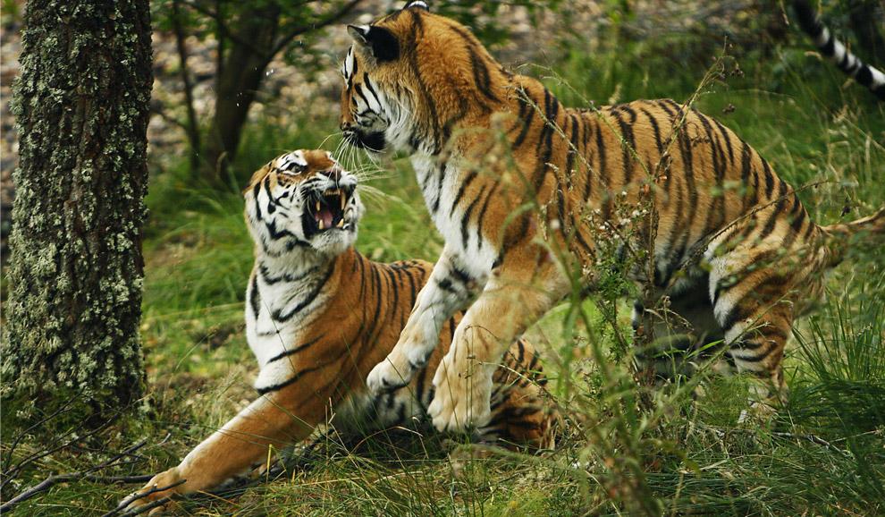 World Animal Day.