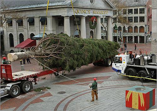 Christmas Tree Set Up In Faneuil Hall Boston Boston Com