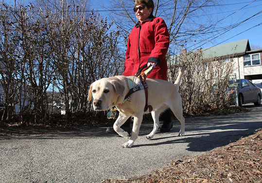 Postal Service To Honor Dogs At Work Boston Com
