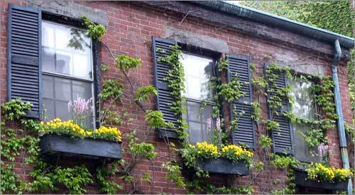 Three Window Bo With Yellow Flowers On A Brick House