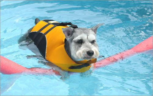 Dogs of summer 2008, part 3 - Boston com