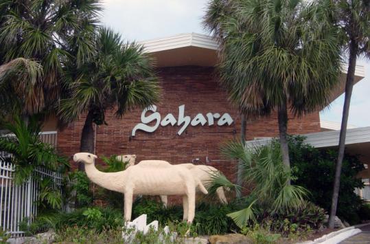 The Sahara Beach Club Camels Have Been A Familiar Sunny Isles Sight Since 1953