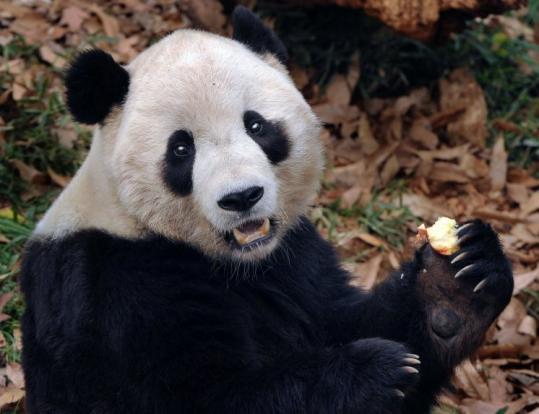 ttt2 panda ending relationship